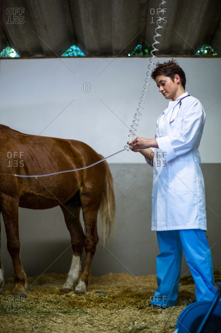 Portrait of woman vet treating a horse on a box