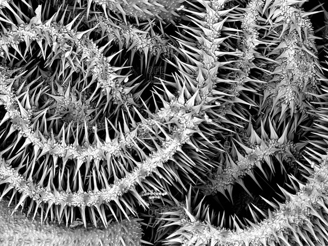 Electron microscope scan of part of a gold-coated caterpillar