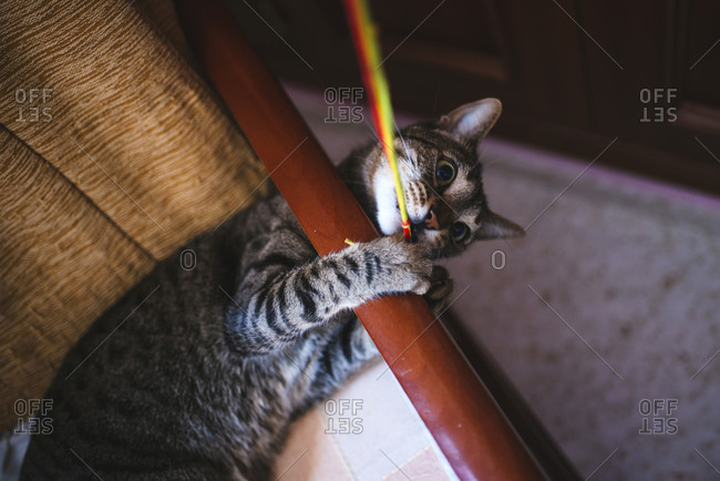 Cat playing with a string