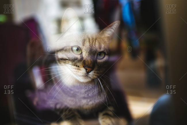 Tabby cat looking through glass