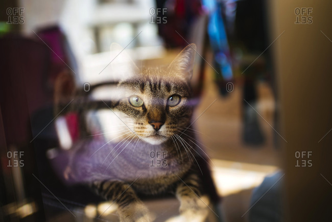 Tabby cat staring through glass