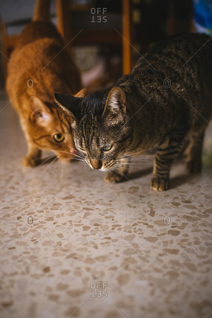Two cats standing on floor