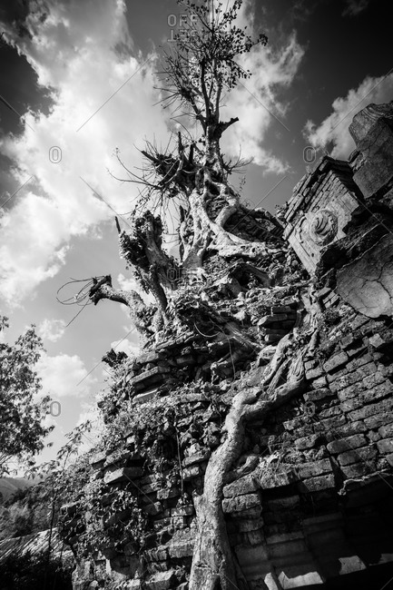 Trees and plants growing in ruins at Shwe Indein Pagoda, Inle Lake, Myanmar