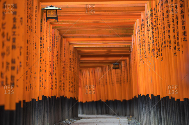 Torii Gates, Fushimi, Inari Shrine, Kyoto, Japan