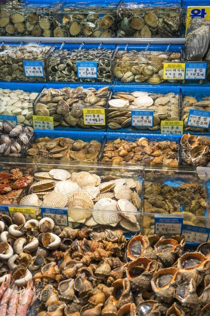 Shellfish on display at the Noryangjin Fish Market in Seoul, South Korea