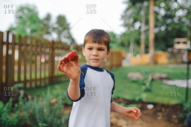 Boy standing outside in a garden holding a strawberry
