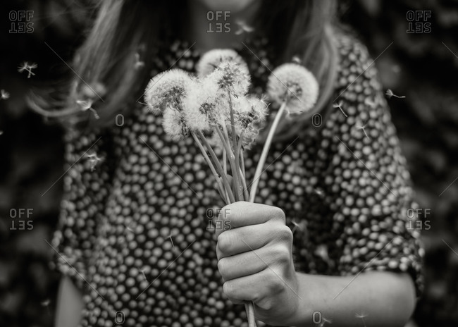Girl holding a bunch of dandelion flowers