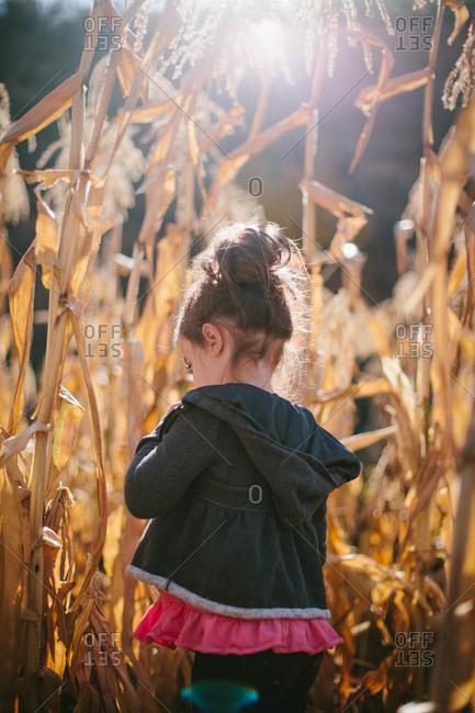 Girl walking in corn field