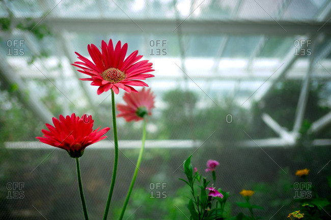 Flowers on display in a hothouse