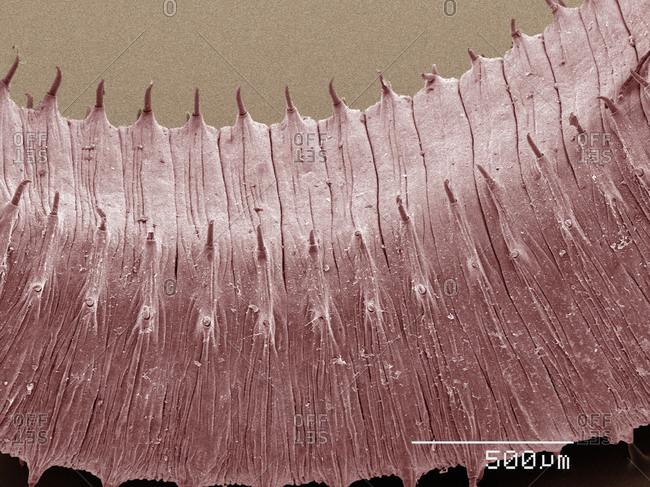 SEM of earthworm's body - Offset