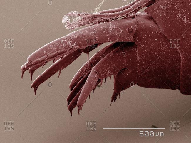 SEM of amphipod - Offset Collection