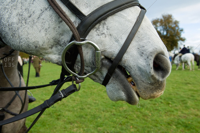 Close up of horse and bridle