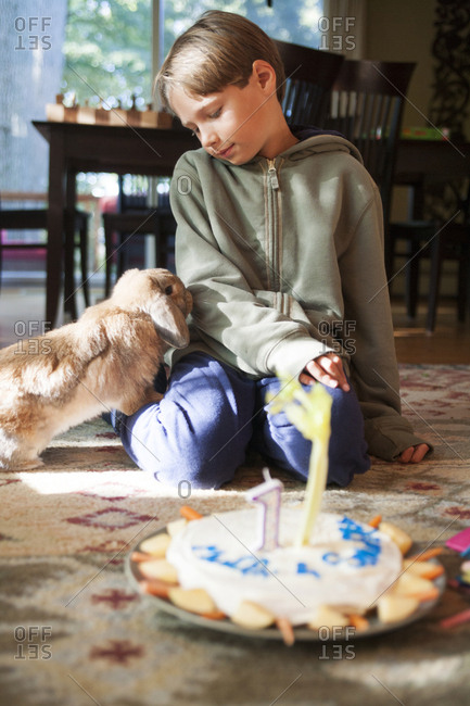 A ten-year-old boy offers his pet rabbit presents and a birthday cake on the pets first birthday