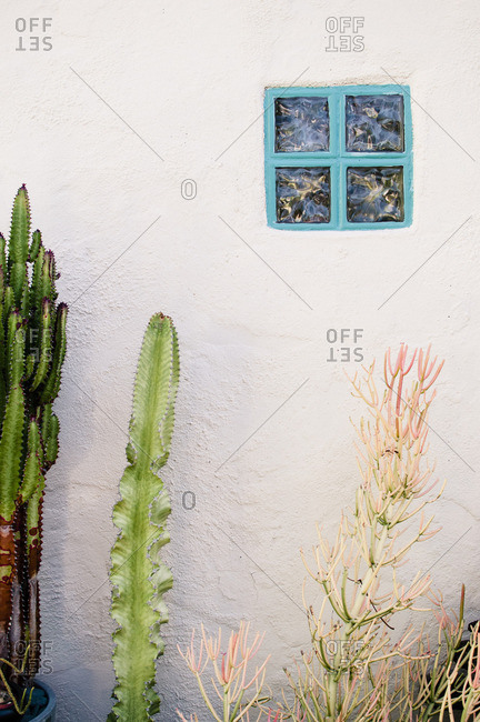 Cactus plants growing along the stone wall of a house