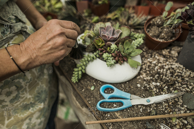 Woman planting succulents in a pot