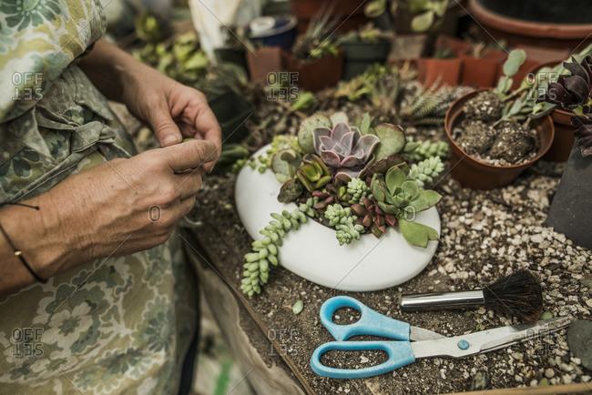 Woman planting succulents in a pot