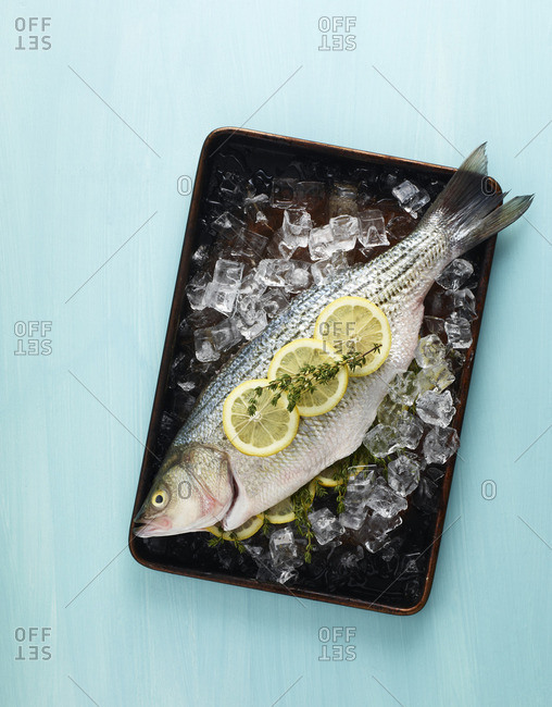 Fresh fish on plate with ice and lemon