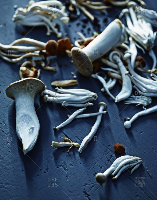 Mushrooms on blue background
