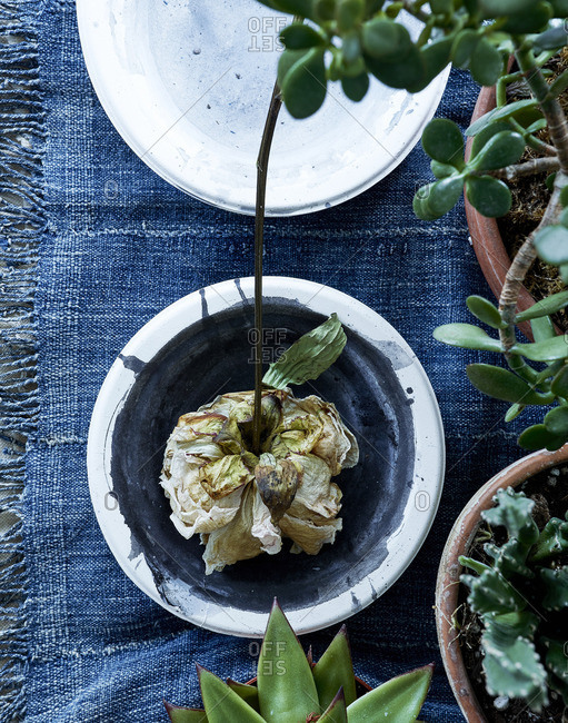 Withered flower in a bowl