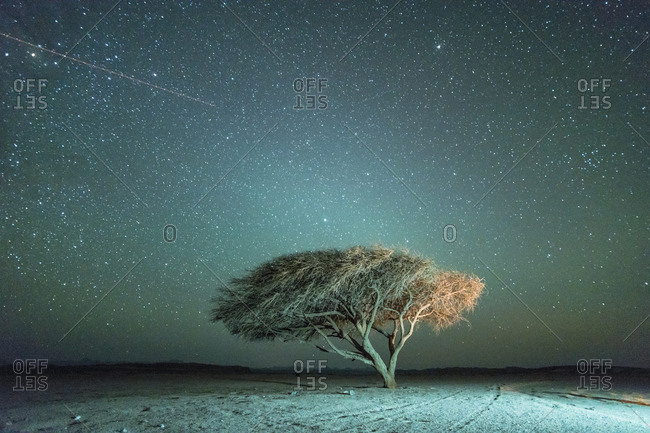Desert at night with stars Acacia tree and strip left by a plane in a National Park protected area