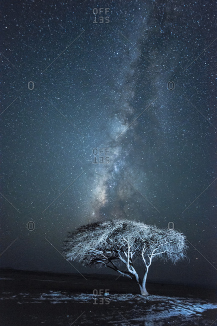 Acacia tree and the Milky Way  in a National Park protected area