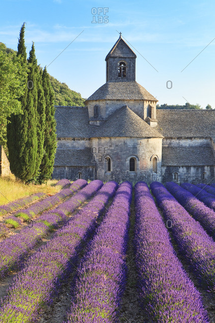 Lavender fields in front of the famous abbey