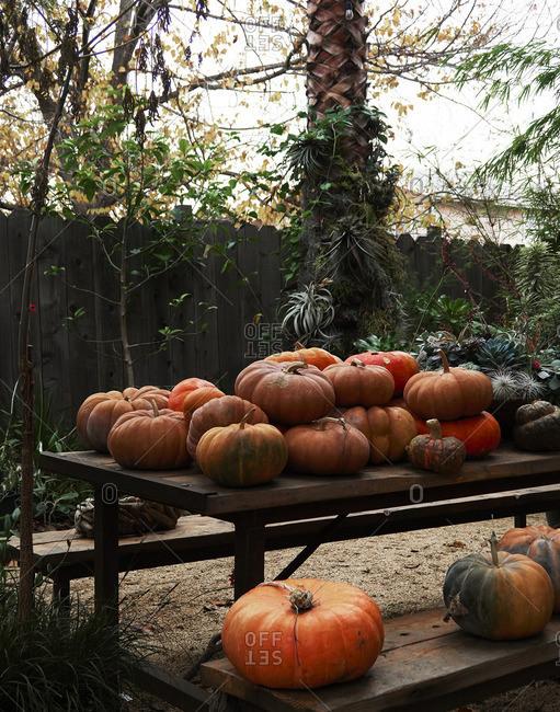 Pumpkins on a picnic table