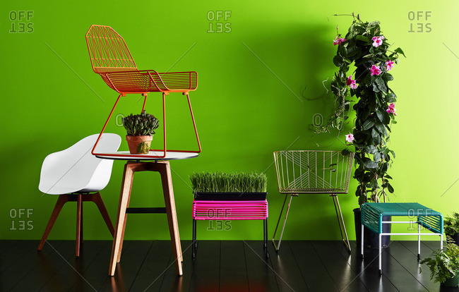 Plants and modern furniture