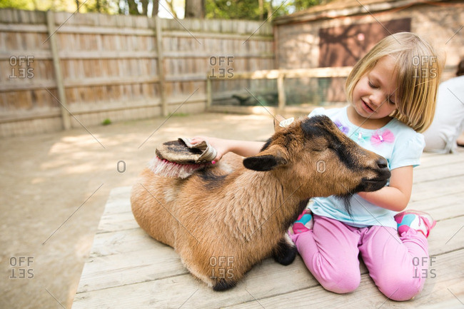 Little girl brushing a goat\'s fur