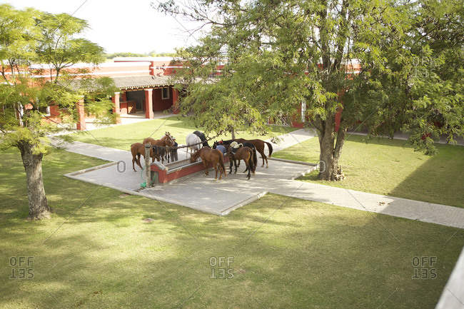 March 18, 2013: Horses at trough on ranch in San Antonio de Areco, Argentina