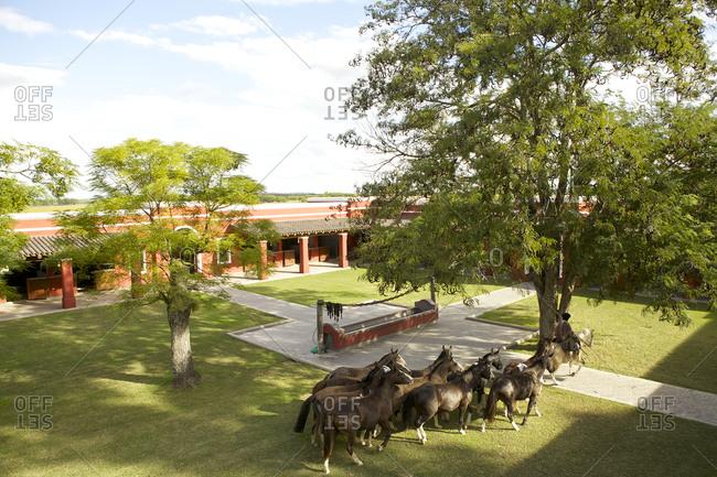 Horses on a ranch in San Antonio de Areco, Argentina