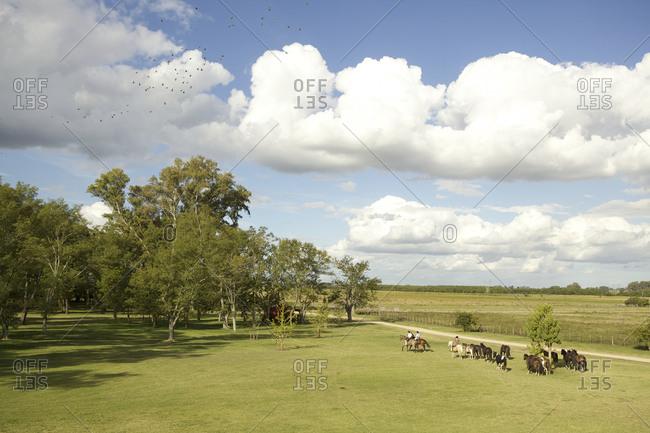 Horses on a scenic ranch in San Antonio de Areco, Argentina