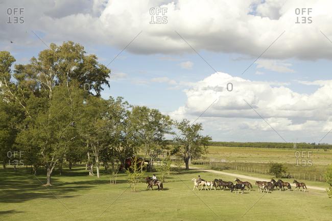 Gauchos leading horses in field on estancia at San Antonio de Areco, Argentina