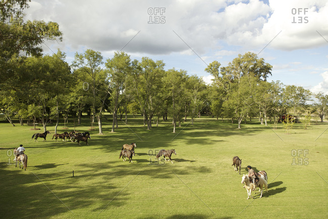 Elevated view of horses running in field with gauchos, Argentina
