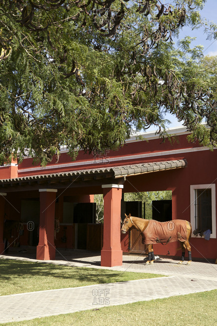 Horse wearing blanket at ranch in Argentina