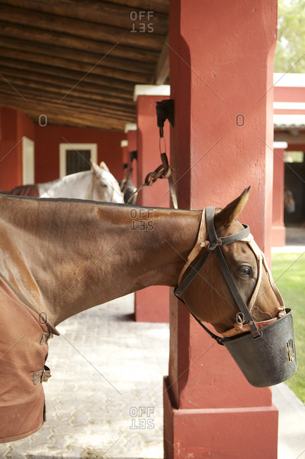Horses at stables on ranch in Argentina