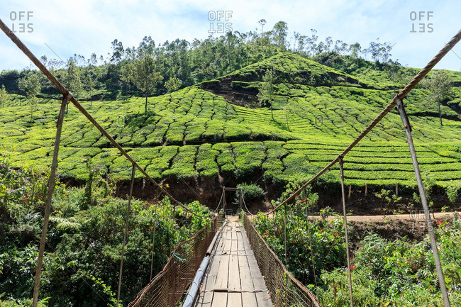 Rope bridge leading to a hillside with manicured bushes