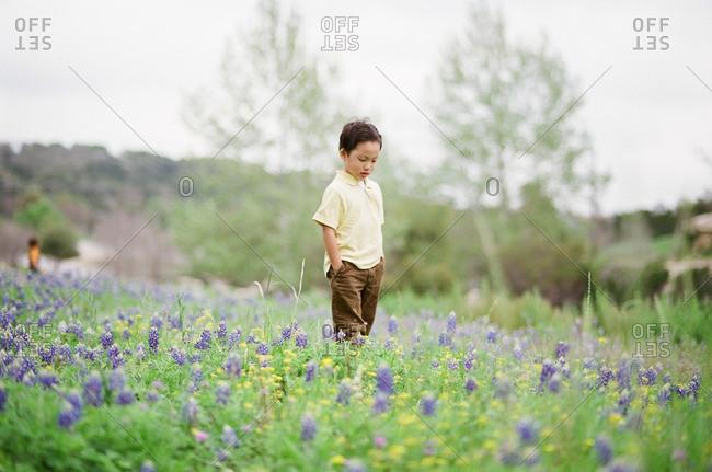 Boy standing in a field of wildflowers