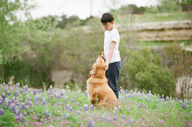 Boy with his dog in a field of wildflowers