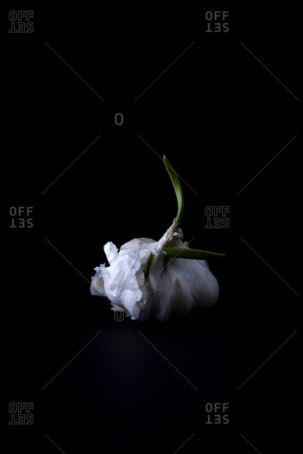 Garlic bulb on a black seamless background