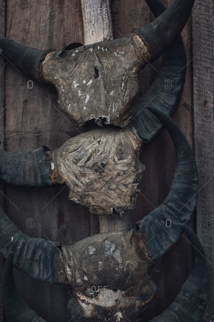 Antlers on wood wall
