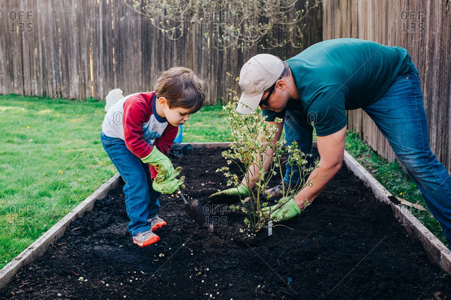 Boy plants garden with father