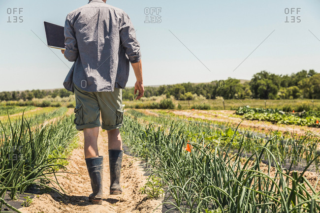 Neck down rear view of man walking in vegetable patch carrying laptop