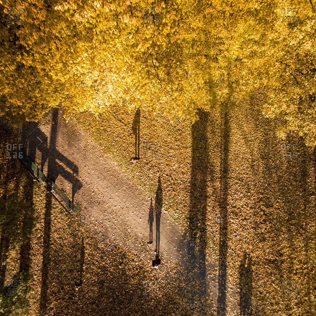People standing in a park scattered with yellow leaves