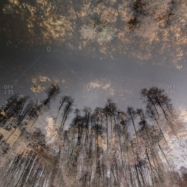 Tall trees reflected in floodwaters in Lithuania