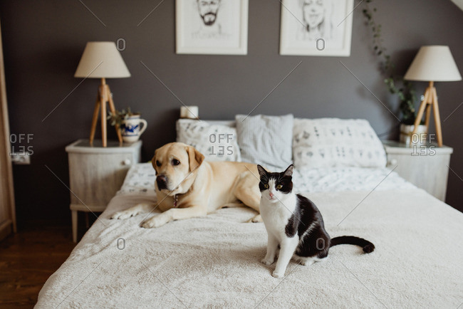 Portrait of dog and cat on bed