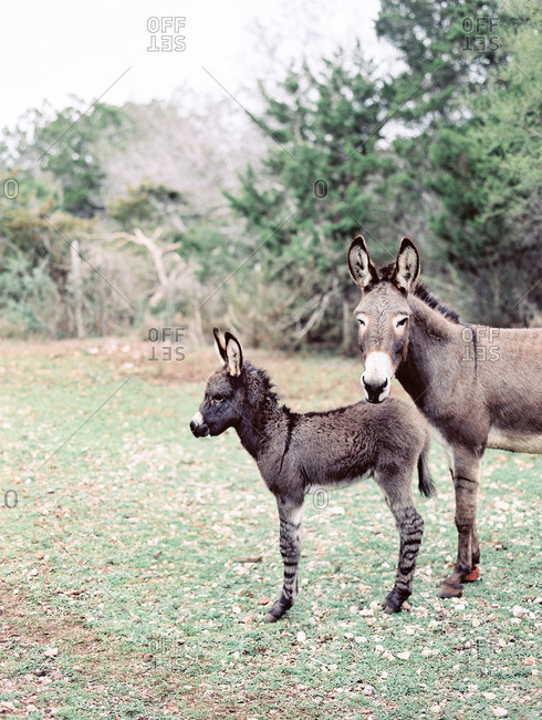 Two donkeys standing on grass