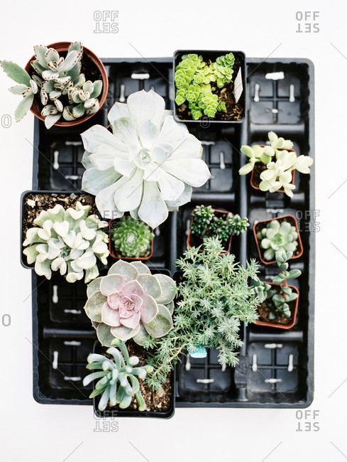 Elevated view of succulents plants