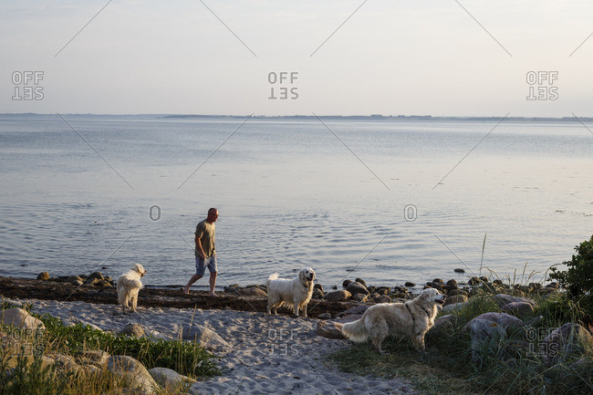 Hundested, Denmark - July 4, 2015: Man walking with his dogs along the beach