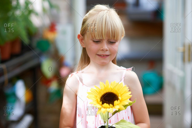Portrait of girl holding sunflower in greenhouse
